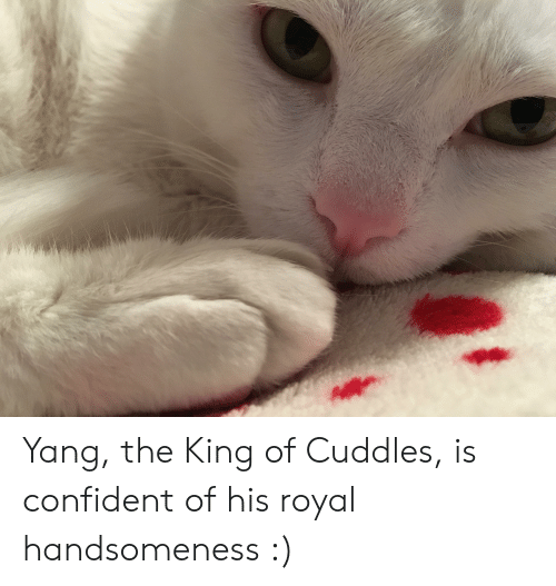 King, Confident, and Cuddles: Yang, the King of Cuddles, is confident of his royal handsomeness :)