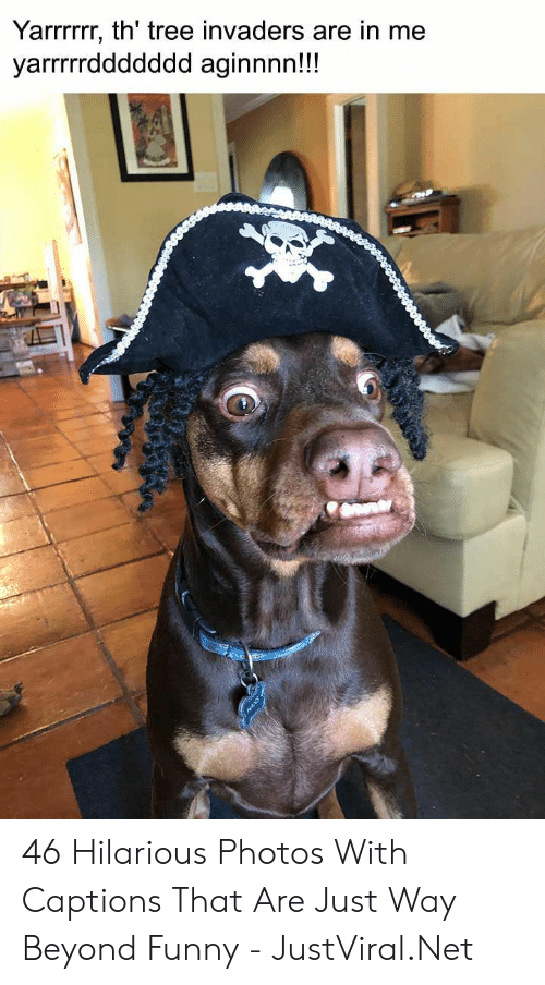 Captions: Yarrrrr, th' tree invaders are in me  yarrrrddddddd aginnnn!!! 46 Hilarious Photos With Captions That Are Just Way Beyond Funny - JustViral.Net