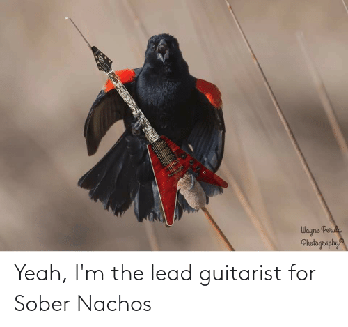 Sober: Yeah, I'm the lead guitarist for Sober Nachos
