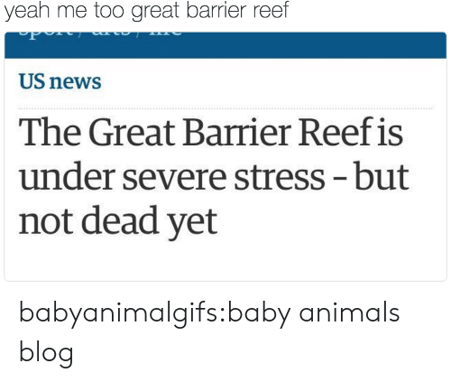 Baby Animals: yeah me too great barrier reef  US news  The Great Barrier Reef is  under severe stress -but  not dead yet babyanimalgifs:baby animals blog