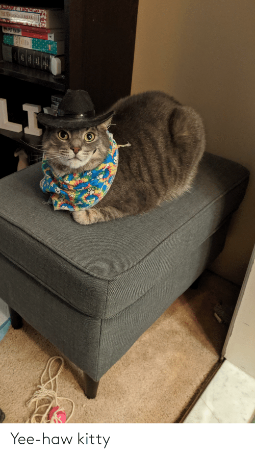 yee: Yee-haw kitty