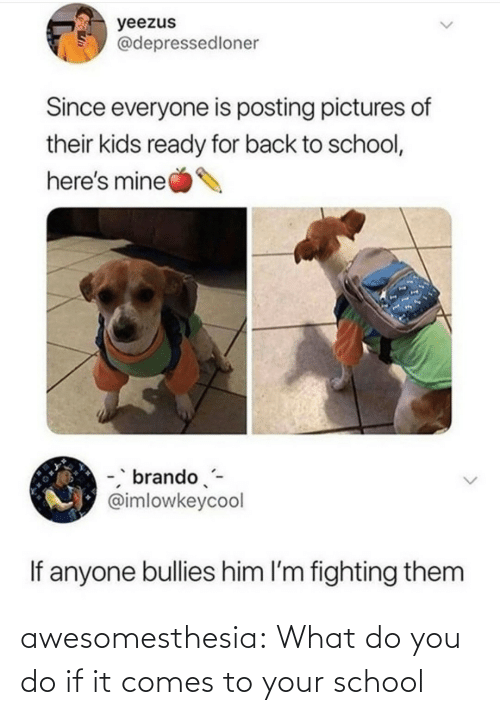 Back to School: yeezus  @depressedloner  Since everyone is posting pictures of  their kids ready for back to school,  here's mine  -, brando-  @imlowkeycool  If anyone bullies him l'm fighting them awesomesthesia:  What do you do if it comes to your school