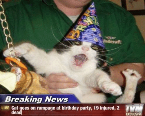 Breaking News: yellaraft  Breaking News  TN  LIVE Cat goes on rampage at birthday party, 19 injured, 2  dead  EXCLUSIVE