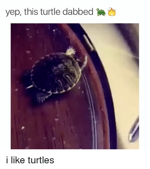 Like Turtles
