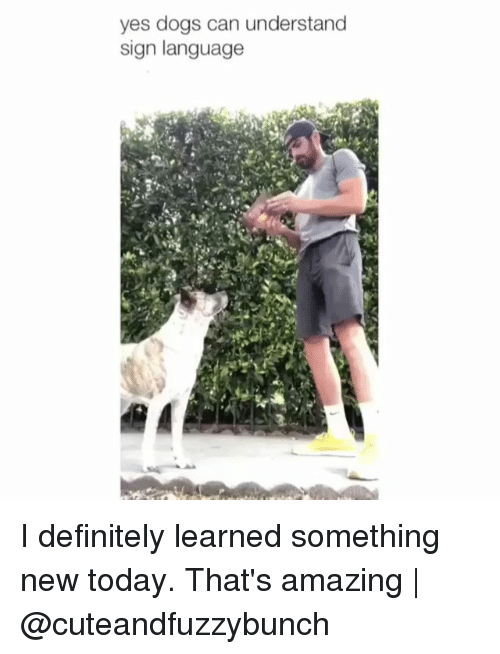 Thats Amazing: yes dogs can understand  sign language I definitely learned something new today. That's amazing | @cuteandfuzzybunch