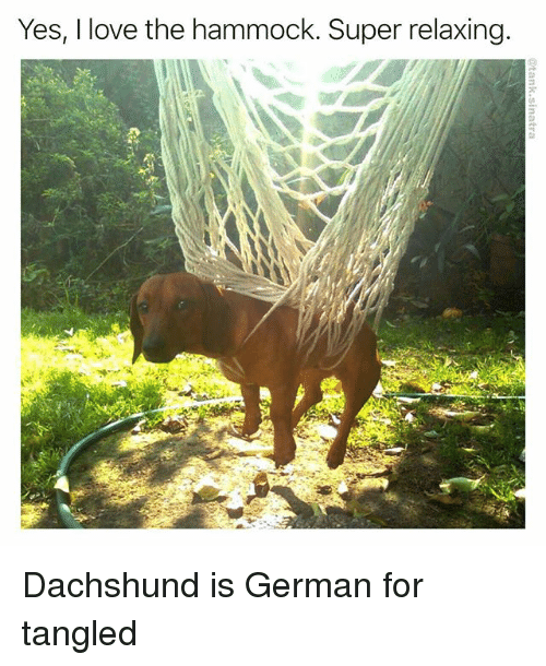 Hammocking: Yes, I love the hammock. Super relaxing Dachshund is German for tangled