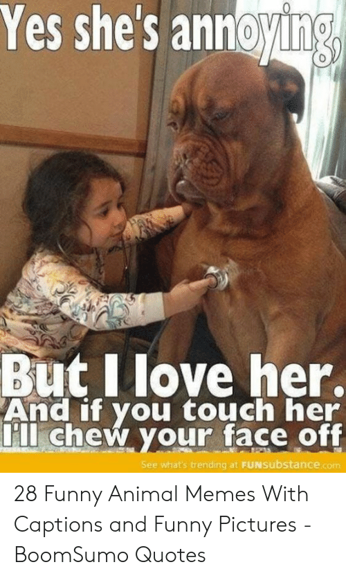 And Funny: Yes shes annoying  0  But Ilove her.  And if you touch her  ll chew your face off  See what's trending at FUNsubstance.com 28 Funny Animal Memes With Captions and Funny Pictures - BoomSumo Quotes