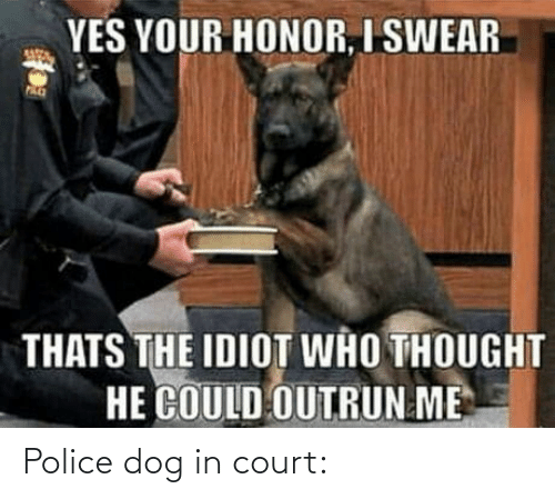 Idiot: YES YOUR HONOR, I SWEAR  THATS THE IDIOT WHO THOUGHT  HE COULD OUTRUN ME Police dog in court: