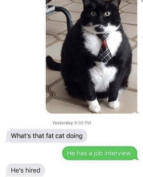 Job interview: Yesterday 9:50 PM  What's that fat cat doing  He has a job interview  He's hired