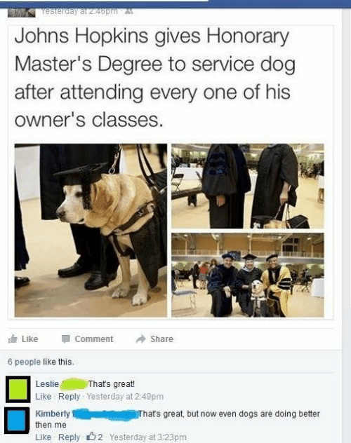 johns hopkins: Yesterday at 24bpm A  Johns Hopkins gives Honorary  Master's Degree to service dog  after attending every one of his  owner's classes.  e Like  Comment  Share  6 people like this.  That's great!  Like Reply Yesterday at 2:49pm  Leslie  Kimberly  That's great, but now even dogs are doing better  then me  Like Reply 62 Yesterday at 3:23pm
