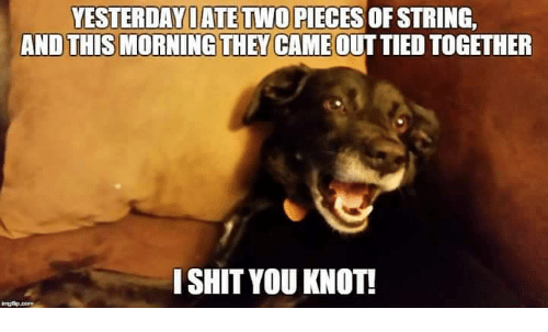 I Shit You Knot: YESTERDAY ATE TWO PIECES OF STRING  AND THIS MORNING THEY CAME OUTTIED TOGETHER  I SHIT YOU KNOT!