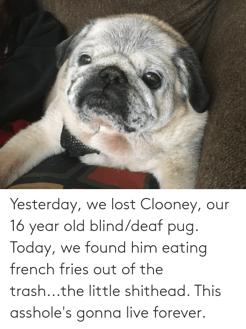 Live Forever: Yesterday, we lost Clooney, our 16 year old blind/deaf pug. Today, we found him eating french fries out of the trash...the little shithead. This asshole's gonna live forever.