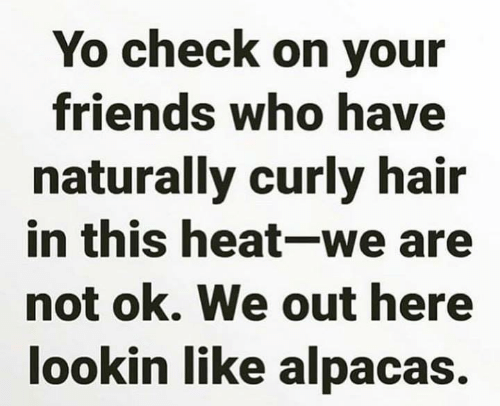 Dank, Friends, and Yo: Yo check on your  friends who have  naturally curly hair  in this heat-we are  not ok. We out here  lookin like alpacas.