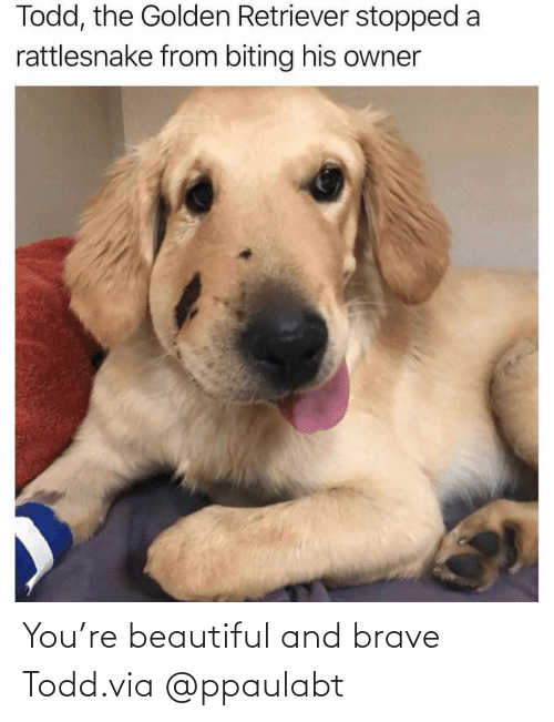 Brave: You're beautiful and brave Todd.via @ppaulabt
