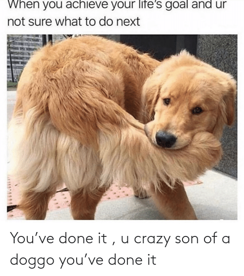 son: You've done it , u crazy son of a doggo you've done it