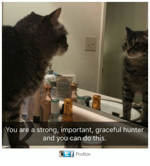 Stronge: You are a strong, important, graceful hunter  and you can do this.  Ef