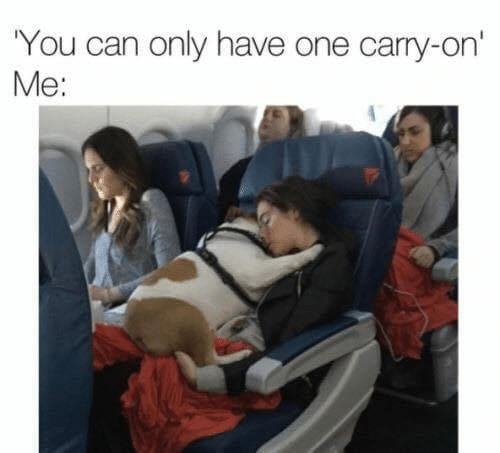 Memes, 🤖, and Can: You can only have one carry-on'  Me: