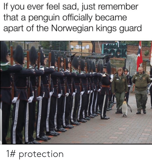 Norwegian, Penguin, and Sad: you ever feel sad, just remember  that a penguin officially became  apart of the Norwegian kings guard  If 1# protection