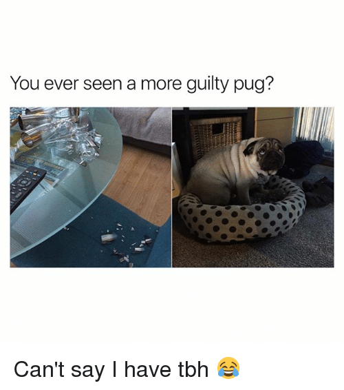 Pugged: You ever seen a more guilty pug? Can't say I have tbh 😂