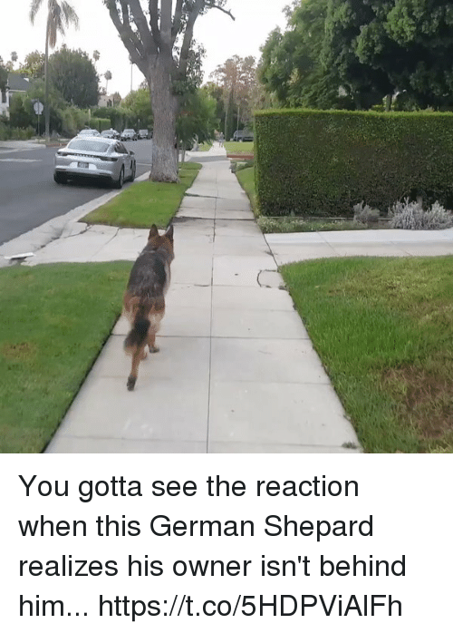 german shepard: You gotta see the reaction when this German Shepard realizes his owner isn't behind him... https://t.co/5HDPViAlFh