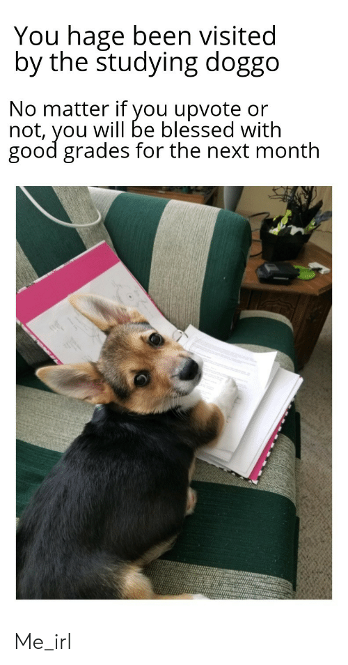 Good Grades: You hage been visited  by the studying doggo  No matter if you upvote or  not, you will be blessed with  good grades for the next month Me_irl