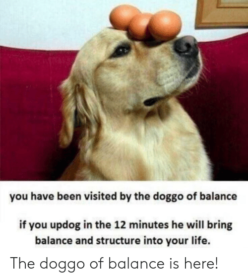 You Have Been Visited By: you have been visited by the doggo of balance  if you updog in the 12 minutes he will bring  balance and structure into your life. The doggo of balance is here!