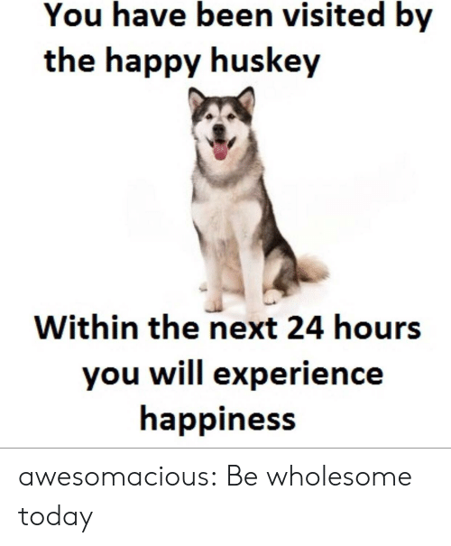 You Have Been Visited By: You have been visited by  the happy huskey  Within the next 24 hours  you will experience  happiness awesomacious:  Be wholesome today