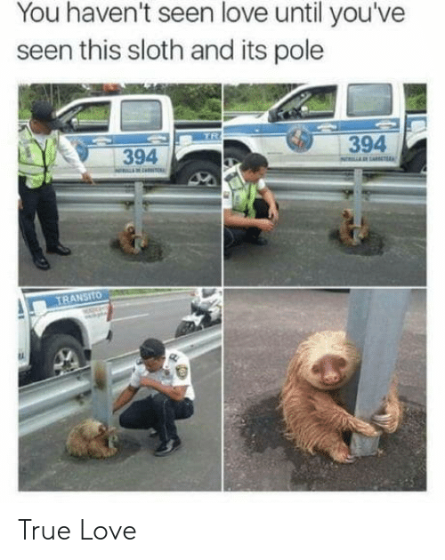 Sloth: You haven't seen love until you've  seen this sloth and its pole  TR  394  394  NARAE  TRANSITO True Love