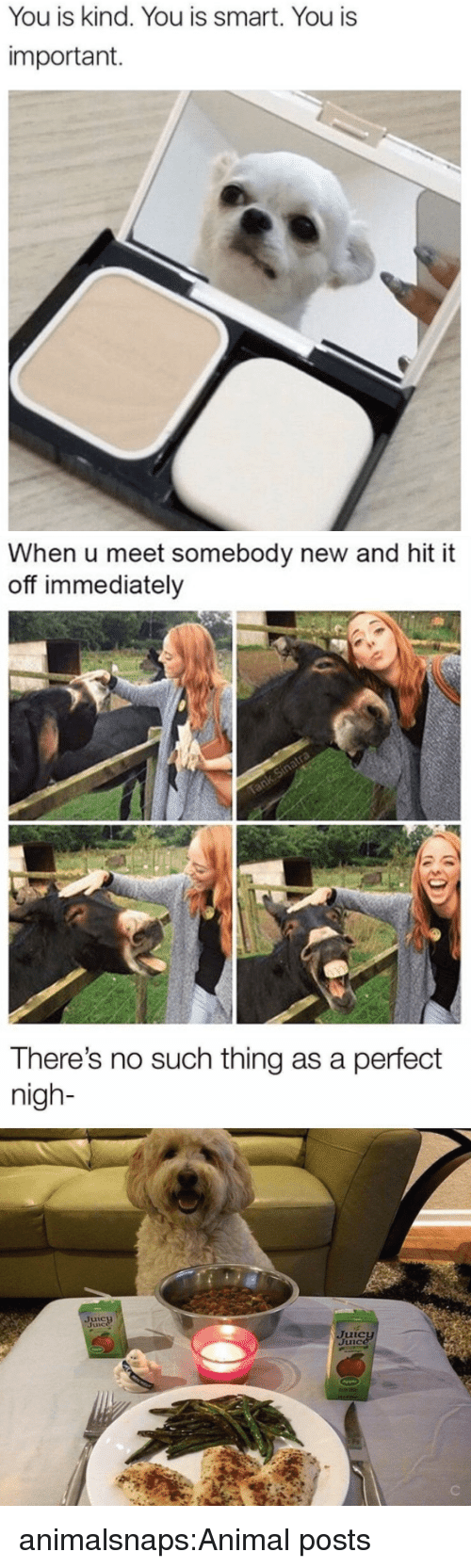 nigh: You is kind. You is smart. You is  important.   When u meet somebody new and hit it  off immediately   There's no such thing as a perfect  nigh- animalsnaps:Animal posts