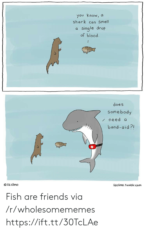 Can Smell: you know, a  shark can Smell  a single drop  of blood  does  Somebody  /need a  band-aid?  Oliz climo  lizclimo.tumblr.com Fish are friends via /r/wholesomememes https://ift.tt/30TcLAe