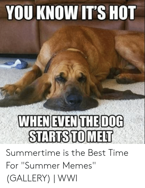 """Summer Memes 2018: YOU KNOW IT'S HOT  WHEN EVEN THE DO0  STARTSTOMELT Summertime is the Best Time For """"Summer Memes"""" (GALLERY) 