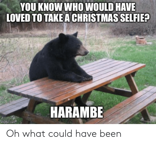 Imgflip Com: YOU KNOW WHO WOULD HAVE  LOVED TO TAKE A CHRISTMAS SELFIE?  HARAMBE  imgflip.com Oh what could have been