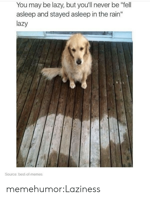 "Best Of Memes: You may be lazy, but you'll never be ""fell  asleep and stayed asleep in the rain""  lazy  Source: best-of-memes memehumor:Laziness"