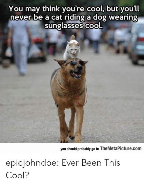 Sunglasses: You may think you're cool, but you'll  never be a cat riding a dog wearing  sunglasses co  ol.  you should probably go to TheMetaPicture.com epicjohndoe:  Ever Been This Cool?