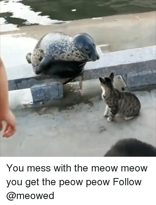Mess With The: You mess with the meow meow you get the peow peow Follow @meowed