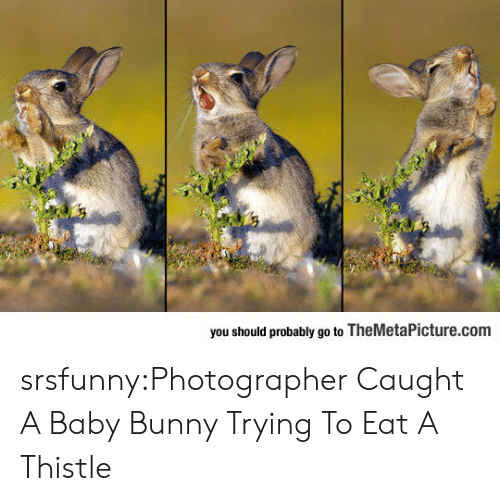 Tumblr, Blog, and Baby: you should probably go to TheMetaPicture.com srsfunny:Photographer Caught A Baby Bunny Trying To Eat A Thistle