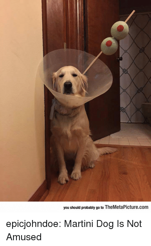 Tumblr, Blog, and Dog: you should probably go to TheMetaPicture.conm epicjohndoe:  Martini Dog Is Not Amused