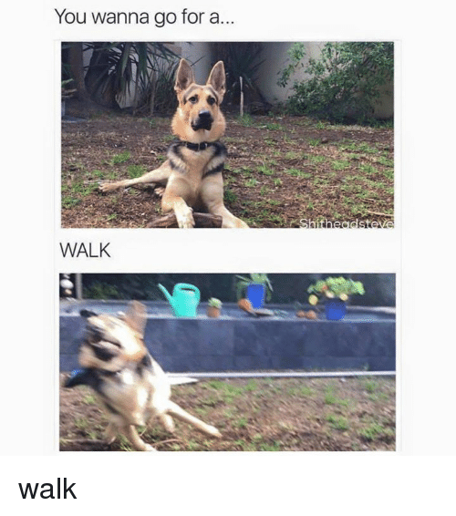 Memes, 🤖, and You: You wanna go for a  WALK walk
