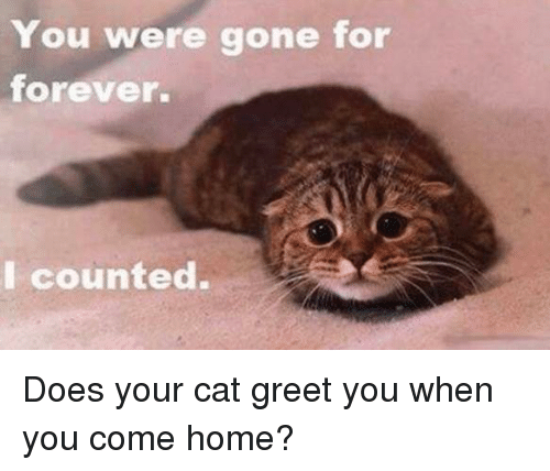 You Were Gone For Forever I Counted: You were gone for  forever.  I counted. Does your cat greet you when you come home?