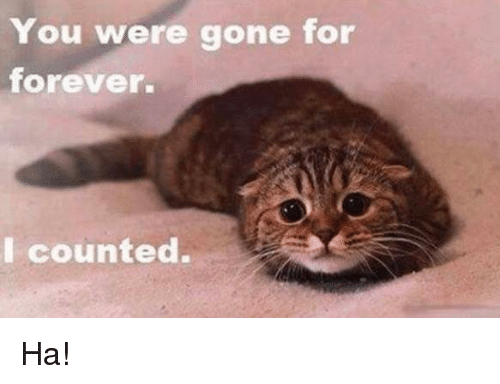 You Were Gone For Forever I Counted: You were gone for  forever.  I counted. Ha!