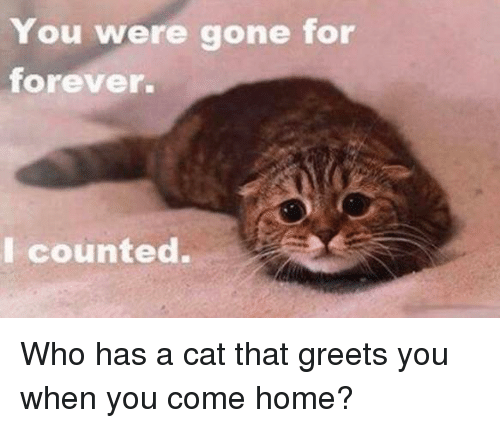 You Were Gone For Forever I Counted: You were gone for  forever.  I counted. Who has a cat that greets you when you come home?