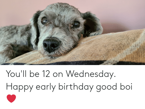 Wednesday: You'll be 12 on Wednesday. Happy early birthday good boi ❤