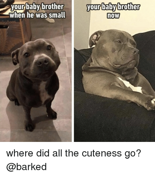 Memes, All The, and Baby: your baby brother  when he was smal  your babybrother  now  uisdoos where did all the cuteness go? @barked