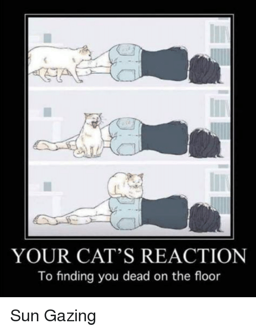 Cats, Memes, and 🤖: YOUR CAT'S REACTION  To finding you dead on the floor Sun Gazing