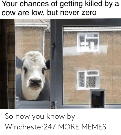 Chances: Your chances of getting killed by a  Cow are low, but never zero So now you know by Winchester247 MORE MEMES