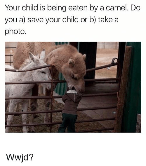 wwjd: Your child is being eaten by a camel. Do  you a) save your child or b) take a  photo. Wwjd?