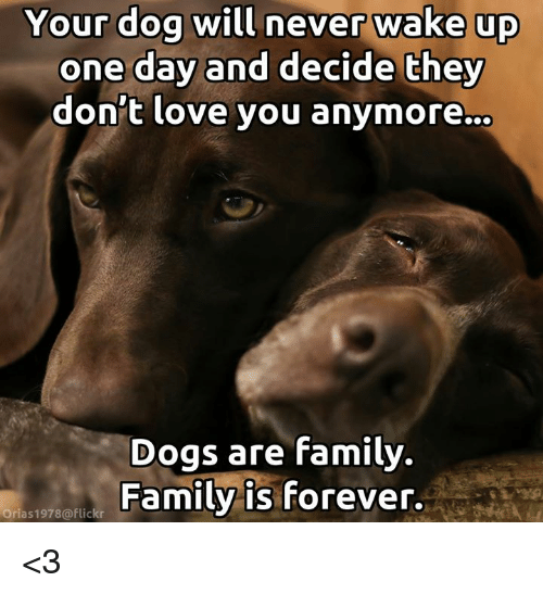 Dogs, Family, and Love: Your dog will never wake up  one day and decide they  don't love you anymore.  Dogs are family.  Family is forever.  Orias1978@flickr <3