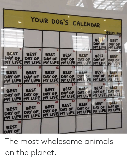 Animals, Dogs, and Life: YOUR DOG'S CALENDAR  @SEMI RAD  BEST  BEST  DAY OF DAY OF  MY LIFE MY LIFE  BEST  DAY OF DAY OF DAY OF DAY OF DAY OF DAY OF DAY OF  MY LIFE MY LIFE MY LIFE MY LIFEIMY LIFE MY LIFE MY LIFE  BEST  BEST  BEST  BEST  BEST  BEST  10  12  13  14  BEST  15  BEST  BEST  BEST  BEST  BEST  DAY OF DAY OF DAY OF DAY OFDAY OF DAY OF DAY OF  MY LIFE MY LIFE MY LIFE MY LIFEMY LFE MY LIFE AY LIFE  BEST  17  19  BEST  DAY OF DAY OF DAY OF DAY OF DAY OF DAY OF DAY OF  MY LIFE MY LIFE MY LIFE MY LIFE MY LIFE MY LIFE MY LIFE  26  20  22  BEST  BEST  BEST  BEST  BEST  BEST  28  29  24  SEST  BEST  BEST  BEST  DAY OF DAY OF DAY OF DAY OF DAY OF DAY OF DAY OF  MY LIFE MY LIFE MY LIFE MY LIFE MY LIFE MY LIFE MY LIFE  BEST  BEST  BEST  31  BEST  PAY OF The most wholesome animals on the planet.