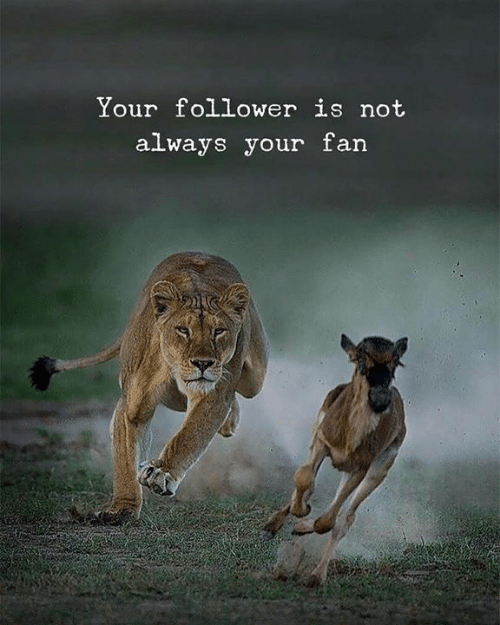 follower: Your follower is not  always your farn