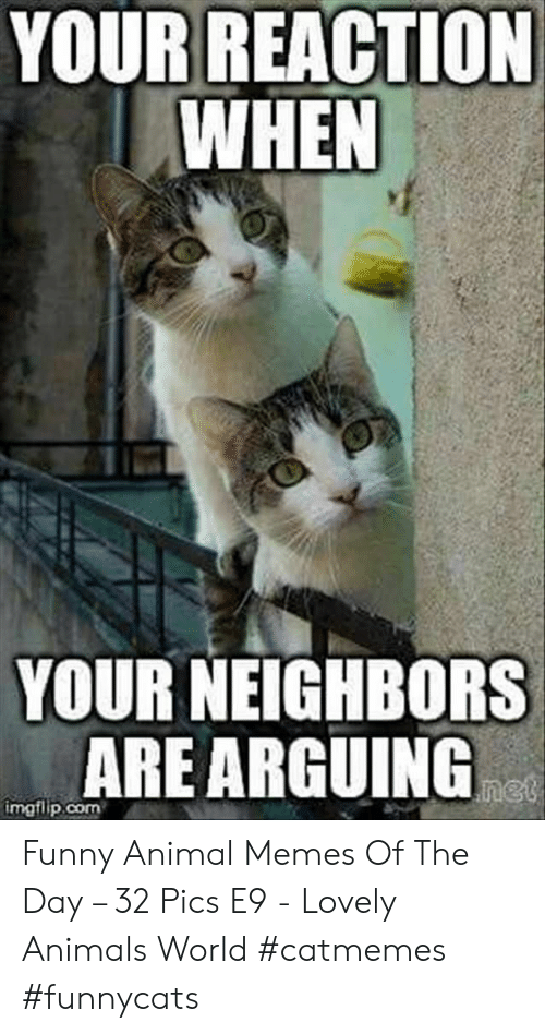Animals, Funny, and Memes: YOUR REACTION  WHEN  YOUR NEIGHBORS  ARE ARGUING  net  imgflip.com Funny Animal Memes Of The Day – 32 Pics E9 - Lovely Animals World #catmemes #funnycats